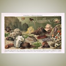 Antique Chromolithograph with 17 Snails 1902