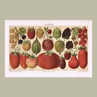 Old Chromo Lithograph with Berries from 1898