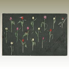 Unusual Tinted Postcard with Tulips from 1906