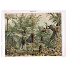 Antique Lithograph related to Fern 1900