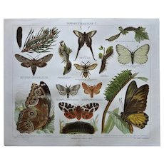 Two Antique Chromo Lithographs with Butterflies 1898