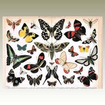 Butterflies. Two Decorative Chromolithograph, 12 x 9, 1900