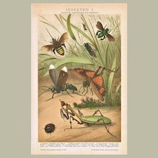 Decorative Chromo lithograph of Insects from 1898