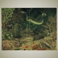 Deep Sea Fauna 19th Ct Chromo Lithograph