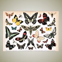Butterflies. Two Decorative Chromolithographs from 1898. 12 x 9 in