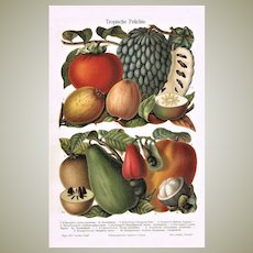 Very decorative Chromo Lithograph with Tropical Fruits from 1898