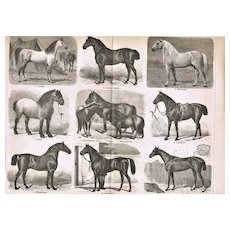 Horse Breed Lithography 1898
