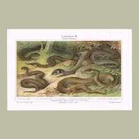 Old Chromo Lithograph from 1898 with Snakes