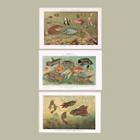 Fishes: 3 Chromo Lithographs from 1899-1902