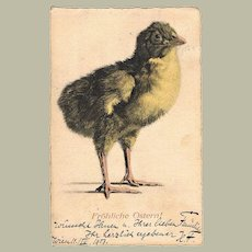 Easter Postcard by Alfred Cossmann. Chick, 1905