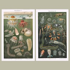 Two Chromo Lithographs from 1898 with Deep Sea Fauna