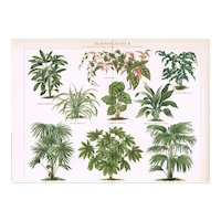 Foliage Plants. Two Antique Chromo Lithographs from 1898