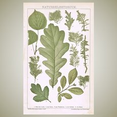 Antique Chromo Lithograph with Leaves and Moss 1898