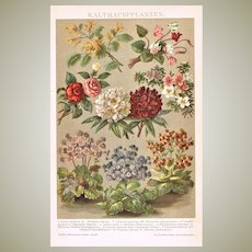 Antique Lithograph Cold House Plants from 1898