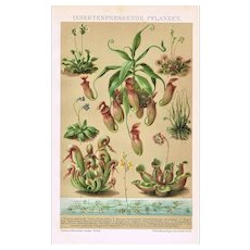 Insect Eating Antique Lithograph from 1898