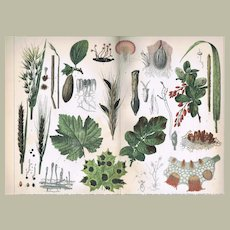 Diseases of Plants. Decorative Chromo Lithograph from 1902