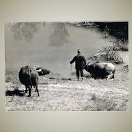 Old China Photo with Peasant and Water Buffaloes