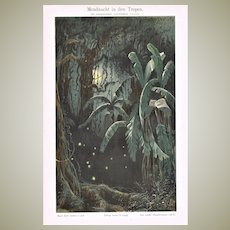 Moon Lit Night in the Tropics Antique Chromo Lithograph from 1900