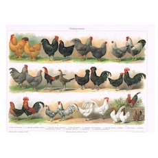 Hens and Cocks Antique Chromo Lithograph from 1898