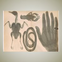 Antique Chromo Lithograph with X Ray Samples 1898