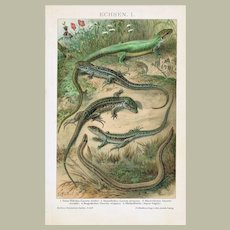 Old, decorative Chromo Lithograph with Saurian from 190