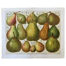 Antique Chromo Lithograph with Pears Printed in 1898