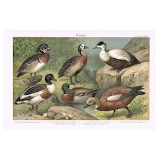 Ducks Decorative Chromo Lithograph  from 1898