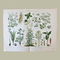 Poisonous Plants. 2 Decorative, larger Chromolithographs from 1899