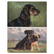 Two vintage Postcards of Dogs.