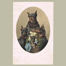 Attractive Old Postcard with 4 Dogs c 1905