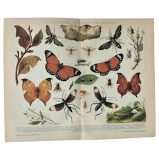 Genetic Selection Chromo Lithograph from 1898