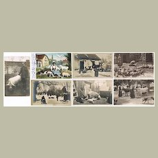 Old lot of 7 Postcards with Pigs c 1910