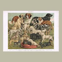 Antique Chromo Lithograph with 21 Breeds of Dogs 1898