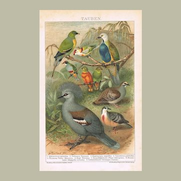 Decorative Chromo Lithograph with Doves 1898