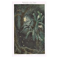 Moonlit Night in the Tropics Lithograph from 1900
