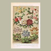 Cold house plants Decorative Lithograph from 1898