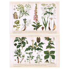 Poisonous Plants Two Antique Lithographs from 1893