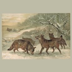 Wolves Chromo Lithographs from 1898