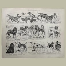 Breed of Dogs Antique Graphic from 1896