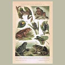 Frogs and Toads Chromo Lithograph 1894