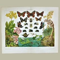 Darwinism Decorative Chromo lithograph of Insects and Plants from 1898