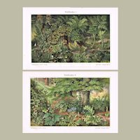 Forest Floor Two Decorative Chromo lithographs from 1898