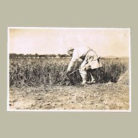 Old China Photo. Peasant harvesting Sorghum. 1925