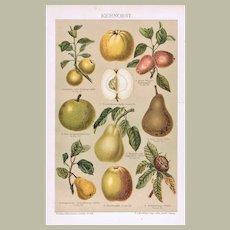 Antique Chromo Lithograph with Pome Fruit 1896