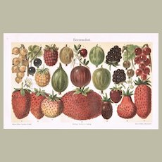 Berries: Old Chromo Lithograph from 1898