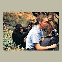 Jane Goodall Autograph on 12 x 8 Photo CoA