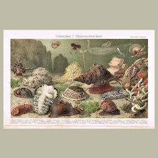 Antique Chromolithograph with 17 Snails 1900