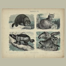 Antique, tinted Etching with Predators  from 1880
