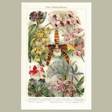 Orchids Decorative Antique Lithograph from 1900