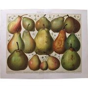 Pears Antique Lithograph from 1900